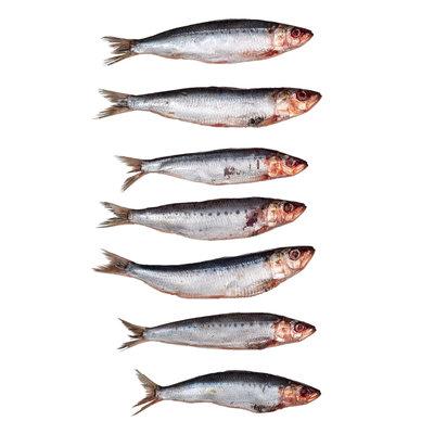Sardines klein