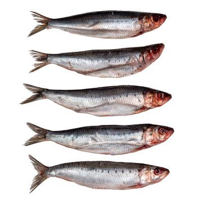 Sardines groot