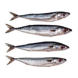Prebaits makreel middel